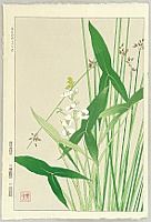 Shodo Kawarazaki 1889-1973 - Chinese Arrowroot