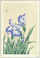 Eiichi Kotozuka 1906-1979 - Blue Iris
