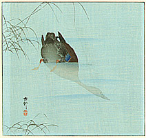 Koson Ohara 1877-1945 - Diving Mallard (blue version)