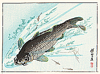 Carp - Kyosai Rakuga
