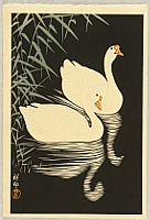 Swans and Reeds
