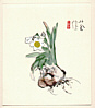 Seiho Takeuchi 1864-1942 - White Daffodil