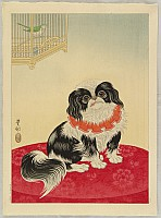 Pekingese Dog and Bush Warbler