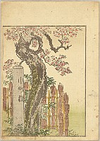 Pleasure of the East - Azuma Asobi - Komachi Cherry Tree