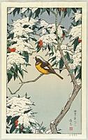 Birds of the Seasons - Winter
