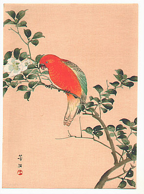 Hobun Kikuchi 1862-1918 - Orange Parrot