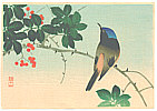 Sozan Ito 1884-? - Blue Head Bird on Nanten Tree (Muller Collection)