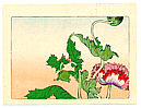 Zeshin Shibata 1807-1891 - Poppy  - Hana Kurabe