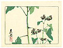 Zeshin Shibata 1807-1891 - Flowering Plant - Hana Kurabe