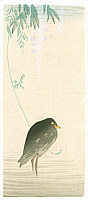 Unknown - Black Bird and Wisteria (Muller Collection)