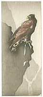 Unknown - Eagle  (Muller Collection)
