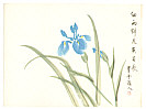 Suiun  fl.ca. 20th C. - Blue Iris