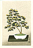Nisaburo Ito 1910-1988 - Bonsai Chrysantehmum (right panel)